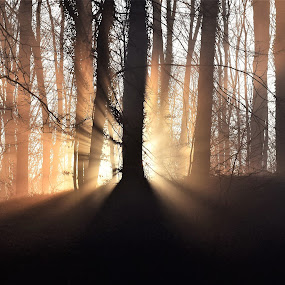 Rhapsody by Slaven Bandur - Landscapes Forests ( forest, sunlight, nature, backlight, winter, rays, trees, morning )