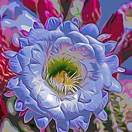 Cacti Blossom by Will McNamee - Digital Art Things ( mcnamee2169@yahoo.com, danielmcnamee@comcast.net, ronmead179@comcast.net, aundiram@msn.com,  )
