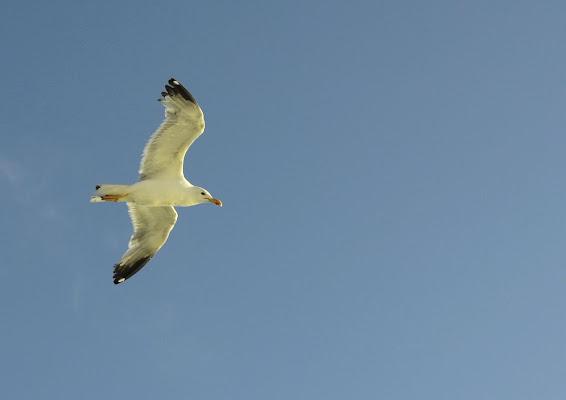 in volo di lopicchio
