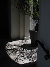 Photo: Half View Potted Palm Shadow