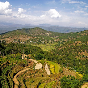 Green Valley by Debopam Banerjee - Landscapes Mountains & Hills ( farmland, leaf, house, travel, plantation, asian, sky, nature, tree, foreground, hill, grass, agriculture, horizon, sunlight, rural, destination, environment, vacation, outdoors, view, vegetable, natural, plant, concept, colorful, vivid, tropical, land, beauty, valley, landscape, highland, mountains, sunny, peaceful, flora, green, indian, traditional, scenic, shadows, field, background, meadow, cloud, crops, freshness, scenery, eco )