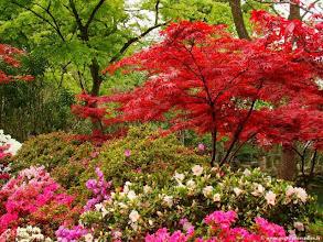 Photo: Chine-Le jardin de la Politique des Simples à Suzhou