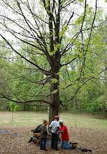 Photo: ... climb a tree, ...