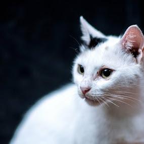 Cat by Austin Neelankavil - Animals - Cats Portraits