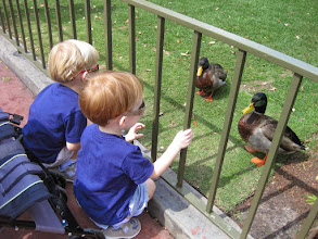 "Photo: Day 2 - Amidst all the wonders of Disney, the boys were especially fascinated by the real ducks that live near the castle. RC (Rick) made us all laugh when he exclaimed, ""Boy, Disney can sure make those ducks look realistic!"""