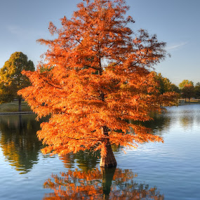 The mirror doesn't Lie by Kent Moody - Landscapes Waterscapes ( water, fall, cypress, reflections, orange.,  )