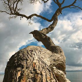 Tree trunk. by Martina Frnčová - Nature Up Close Trees & Bushes ( close up, nature, beach, tree, blur, trunk,  )