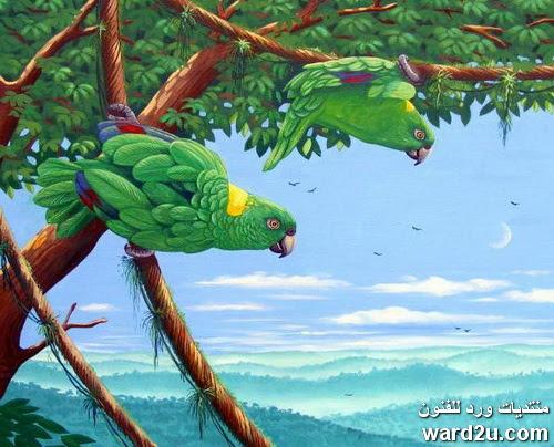 فنان الطيور Roy Astanly Fryer