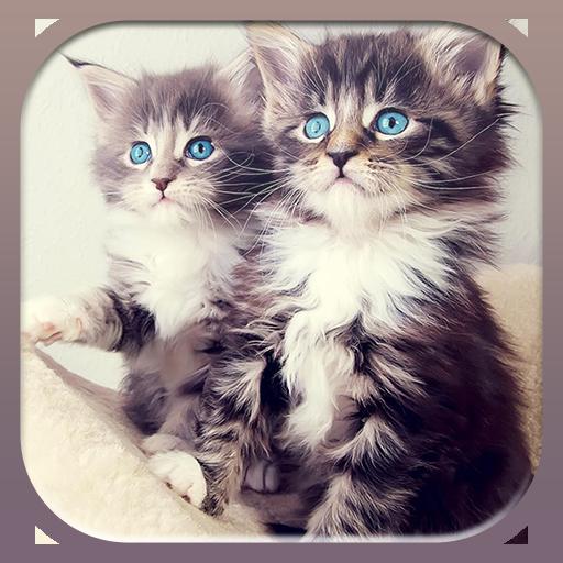 个人化の子猫の壁紙 LOGO-記事Game