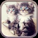 小猫壁纸 icon