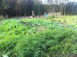 Photo: ビヨンドの畑です いろいろな野菜が好きなところで自由に育っております。