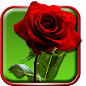 玫瑰态动壁纸 icon