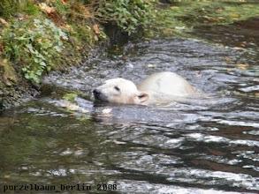 Photo: Schwimmt Knut eben weiter ;-)