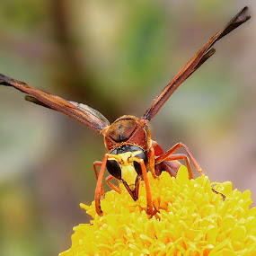by Rajarshi Das - Animals Insects & Spiders
