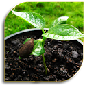 Seeds - Planting (Guide) icon
