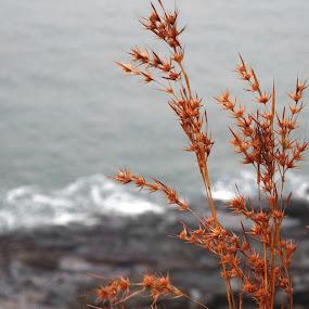 by Akshay Bhondokar - Backgrounds Nature