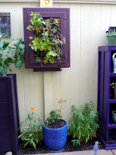 Photo: A vertical strawberry planters made from an old wooden medicine cabinet.