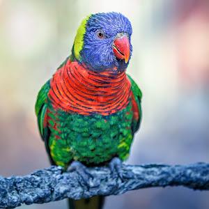 parrot-7.jpg
