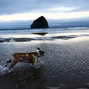 by Emma King - Animals - Dogs Running