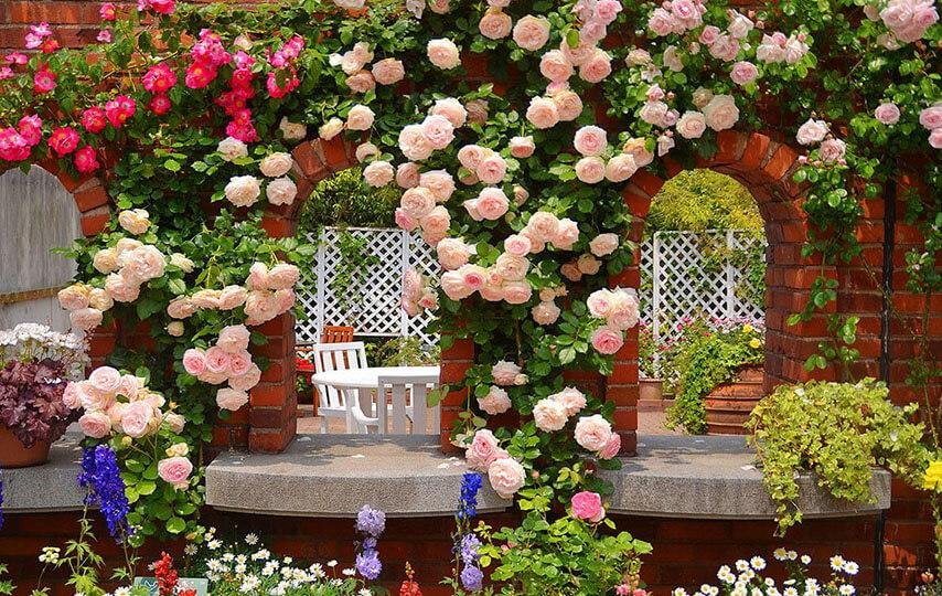 roses garden wallpaper screenshot