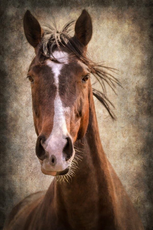 A Horse of Course by Linda Tiepelman - Animals Horses ( pony, hwy d, equine, new melle, horse, horsey, equestrian )