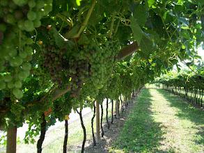 Photo: Wijnbouw lang de Adage