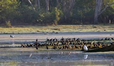 Photo: Day 3 -  Croc and friends... Anbangbang Billabong © Ian Morris