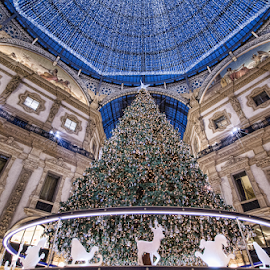 Christmas tree in Milano (Italy) by Gianluca Presto - Public Holidays Christmas ( architectural detail, christmas tree, tree, milano, milan, christmas, holiday, italy, lights, architecture )
