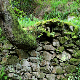 Wall by Gil Reis - Nature Up Close Rock & Stone ( places, walls, rocks, nature, portugal, stones, travel, trees, colors, life )