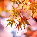 Beautiful Autumn Live Wallpaper icon