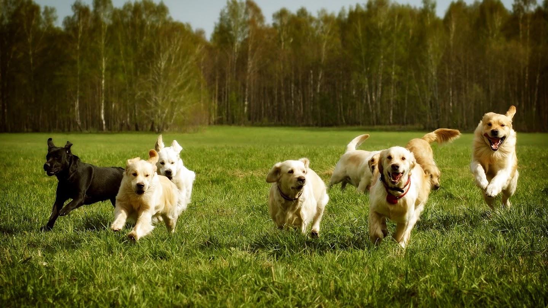 Watch AKC Fastest Dogs USA live