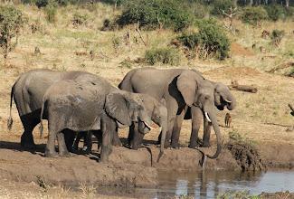 Photo: olifanten bij het waterhole van de Senyati lodge