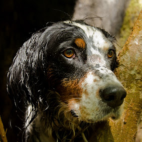 Hunting Dog by Elias Spiliotis - Animals - Dogs Portraits ( tree, hunting, forest, dog, portrait )