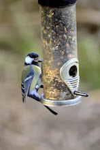 Photo: Great Tit