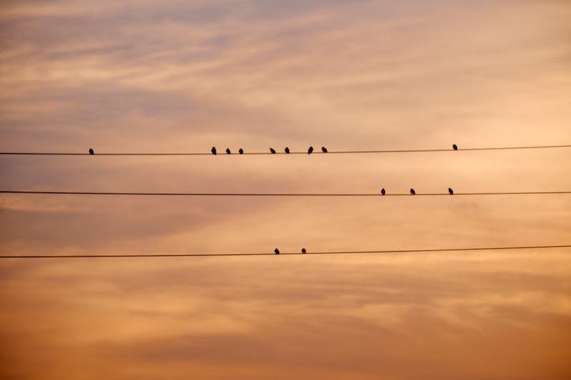 Lo spettacolo del tramonto e alcuni spettatori di Andri55