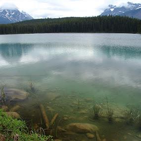 Emerald Lake by Anastasiya Manuilov - Landscapes Travel ( national park, canada )