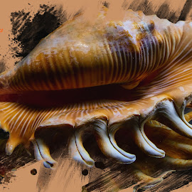 Sea Shell 1 by Dave Walters - Typography Captioned Photos ( typography, nature, photoshop, lumix fz2500, sea shell, colors )