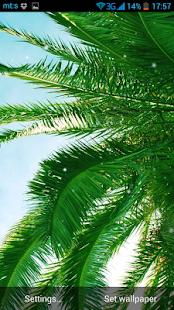 Palma Živá Tapeta - náhled