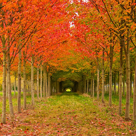 Snohomish Foliage by Karl Cummings - Landscapes Forests ( fall leaves on ground )