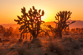 Photo: Sunset light streaming through the dust from several cars which drove by fast on a dirt road. January 2009
