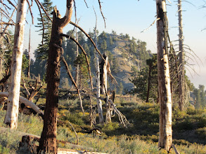 Photo: Looking back south on Hawkins Ridge Trail toward Middle Hawkins