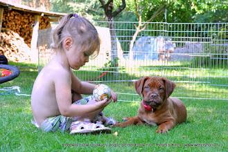 Photo: Hodowla psów rasowych Dogue de Bordeaux - www.weterynaria.tv -