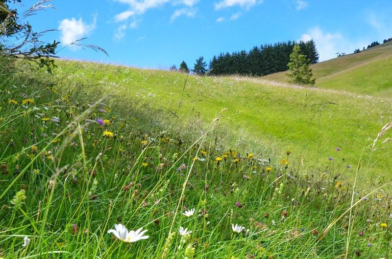 Le colline sono in fior di emmepi78
