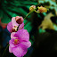 ORCHID by Kamal Mallick - Instagram & Mobile Android ( nature, flower nature, flower close up, flower photography, flower )