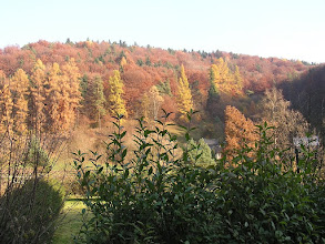 Photo: BB040387 Ojcow - kolory jesieni