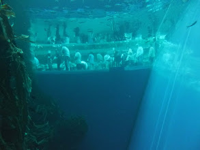 Photo: 巨大水槽の向こうに見られる観光客。