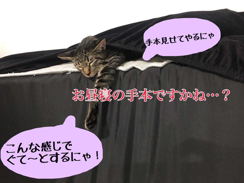 本当にあった猫の話