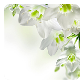 White Flowers Live Wallpaper