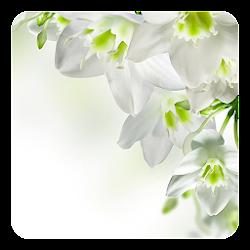 White Flowers Live Wallpaper