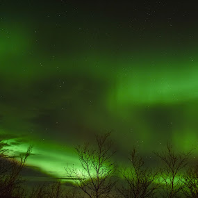 Aurora at her finest by Ricky Friskilæ - Landscapes Starscapes ( bjornevatn, borealis, kirkenes, aurora, norway )